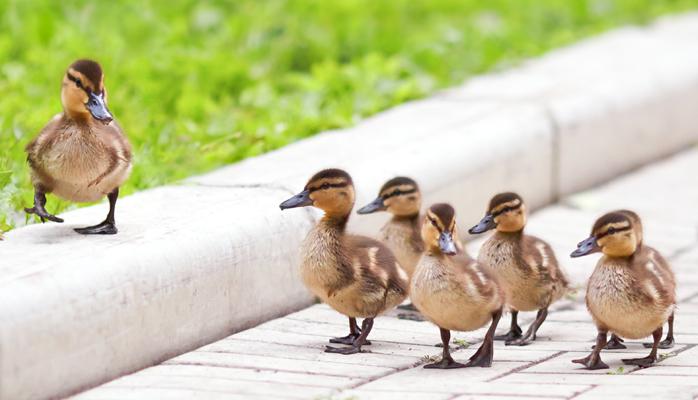 Understanding How Servant Leadership Improves Employee Engagement